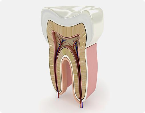 Devitalizzazione dei denti a Magenta, Magnago, Milano | Endodonzia | Amadental
